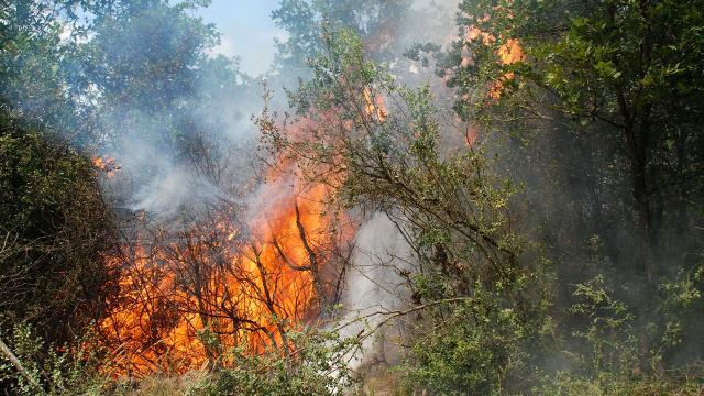 Beykoz'da ormanlık alanda yangın çıktı