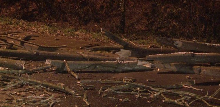 İstanbul'da etkili olan şiddetli rüzgar nedeniyle Beykoz'da çınar ağacı devrildi