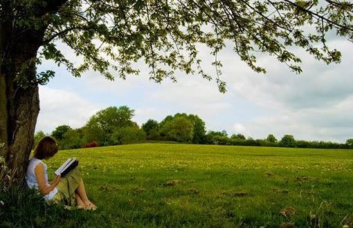 İBB'den kadınlar için bir hatıra ormanı iki kitap