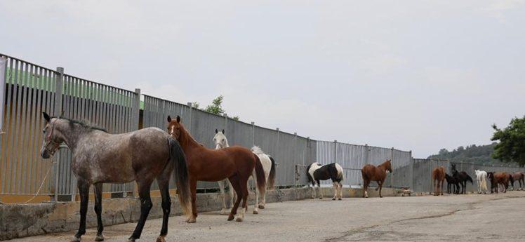 İBB atları Belediye,STK ve Üniversitelere teslim etti