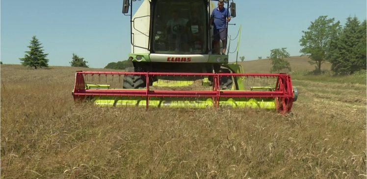 Boş duran arazilerde ilk buğday hasadı yapıldı